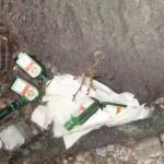 Baumflaschen