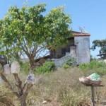 Muellbaum-Brasilien-1