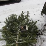 Plastikbäume (30 von 38)