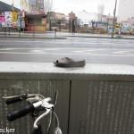 Schuh anziehen-0510