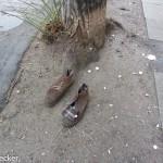 Schuh anziehen-4892
